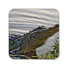 HDR Gator Square Sticker
