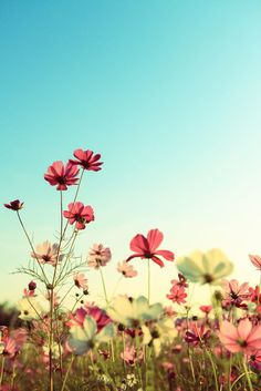 Retro Cosmos Flowers by Yen Hung Lin on 500px
