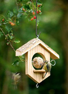 Il mondo in un giardino: Mangiatoie e cibo per uccellini affamati