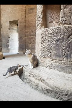 Cats In Ancient Egypt, Egyptian, Animals, Animales, Animaux, Animais, Animal