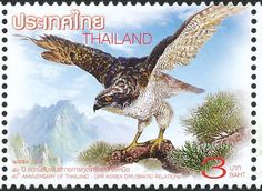 Northern Goshawk stamps - mainly images - gallery format