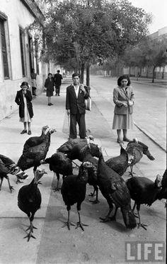 1950, vendedor de pavos en portada de revista Life Color Script, Life Magazine, Great Photos, Animals And Pets, Garden Sculpture, Past, Mexico, Retro, Outdoor Decor