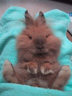 Putting bunnies on their backs puts them in a trance.  I used to do this to Timmy and then I would check out his teeth.