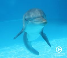 Winter the dolphin... selfie time!! Come visit this amazing dolphin in person!
