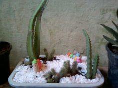 Minhas plantinhas que eu amo