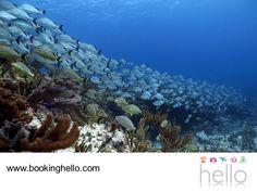 VIAJES EN PAREJA. El segundo arrecife más largo del mundo se encuentra en Playa del Carmen, dentro de la zona de la Riviera Maya. El lugar perfecto para explorar y conocer la fauna marina y donde tú y tu pareja, podrán bucear al lado de hermosos peces de colores sorprendentes. En Booking Hello te recomendamos que al adquirir tu pack all inclusive, elijas el Caribe mexicano para tener un viaje lleno de aventura. #escapatealcaribe www.bookinghello.com