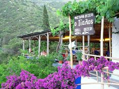 Taverna at Porto Atheras Greece, Holidays, Plants, Garden, Porto, Greece Country, Vacations, Holidays Events, Garten