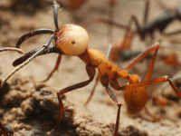 【悲報】世界で一番強い虫、スズメバチさんランク外にwwwwwwwwwwwwwwwwwwww