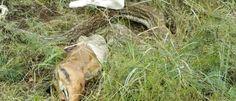 Eca... Píton de 4 metros é vista vomitando impala inteira na África do Sul - Mega Curioso    Nós aqui doMega Curiosojá postamos diversas matérias sobre cobras (com o olho maior que a barriga!) que devoraram todo tipo de animal  comooutras cobrasantílopesecrocodilos e a verdade é que as refeições não são muito agradáveis de se ver. E não é que encontramos outra cena indigesta envolvendo serpentes e suas comidinhas!  Dessa vez se trata de uma píton-africana com nada menos que quatro metros de…