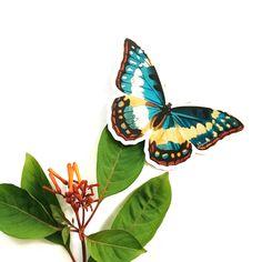 Butterfly Laptop Sticker | Vinyl Vintage Sticker | Car Sticker | Laptop Sticker | Outdoor Sticker | Nonfade Sticker | Waterbottle Sticker by PergamoPaperGoods on Etsy https://www.etsy.com/listing/512321140/butterfly-laptop-sticker-vinyl-vintage