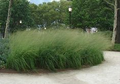 The Battery Bosque Garden by Piet Oudolf Garden Line, Cactus Plante, Prairie Garden, Gravel Garden, Heuchera, Ornamental Grasses, Garden Inspiration, Shrubs, Perennials