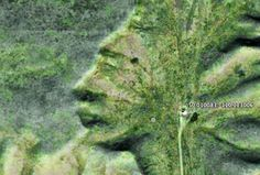 Cool Places in America~Badlands Guardian Eh! Places In America, New Age, Boys Who, This Is Us, Anatomy, House, Home, Homes, Houses