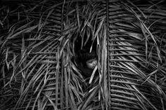Resultado de imagem para tribo indigena brasileira
