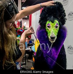 Somerset, New Jersey, USA. 8th June, 2015. #Dog makeover at Extreme #Grooming competition in New Jersey © Zuma/Alamy Live News