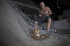A street cat that survives on fish scraps nestles on a net being repaired by Manuel Batista de Moraes in a beautifully-shot series of photographs by Leo Correo from the Vila Pinheiro slum in Rio de Janeiro. The 76-year-old fisherman no longer goes out on the water and makes his living mending fishing nets. It is a constant task, he says, because detritus in the water rips the nets apart