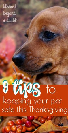 Do you have furry little friends? If so, here is a must read on 9 tips to keeping your pet safe this Thanksgiving.