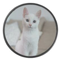 Accessoriesrz: Products on Zazzle Hockey Puck, Teamwork, Kids Learning, Cats, Animals, Things To Sell, Products, Gatos, Animales