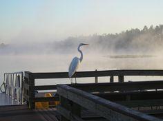 Lake Davenport, FL