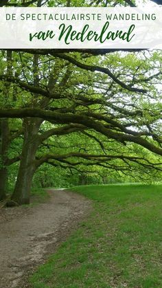 The nature trail in Berg en Dal near Nijmegen is one of the most beautiful walking . Foto Portrait, Day Trips, Netherlands, Countryside, Travel Inspiration, Trail, Beautiful Places, Places To Visit, Hiking