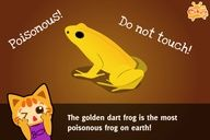 Fun Facts for #Kid #Education 38 – Poisonous Frog #Animal