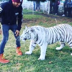 Lewis Hamilton shares a video of himself with a white tiger in Mexico | Daily Mail Online