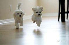 cute animal cute animals