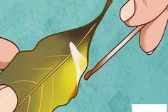 Aprinde cateva frunze de dafin in casa si vezi ce sa intampla dupa 10 minute Home Remedies, Natural Remedies, Health Remedies, Burning Bay Leaves, Health Benefits, Health Tips, Bay Leaves Uses, Psychedelic Effects, Herbs