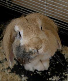 Cute pet bunny photos on this website. Pet advice too.