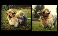 Sold-   100% HAND MADE Fully Poseable, Baby Fox. Synthetic fur-   Poseable Handmade Creations are only available as one of a kinds through eBay Auction Adoptions!  ---> www.e...