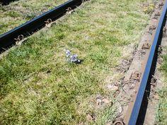 Este un inceput by Bogdan Alexandru Walkway, Paths, Lawn, Grass, Garden, Sidewalk, Lawn And Garden, Sidewalks, Grasses
