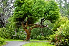 Sua vida vai melhorar muito depois de descansar embaixo de um Cedro e descansar! Quer plantar o seu? Acesse o nosso blog! http://www.naturalistotalalimentos.com.br/planteumaarvore/pagina-inicial