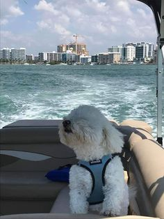 Super Cute Puppies, Cute Little Puppies, Super Cute Animals, Cute Dogs And Puppies, Baby Dogs, Bichon Dog, Cute Baby Cats, Cute Dog Pictures, Dog Life