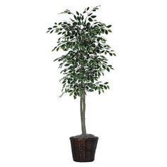"""Executive 72"""" Artificial Potted Natural Variegated Ficus Tree in Dark Green $53.91"""
