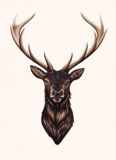 Stag by Peter Carrington My first attempt using markers and I had loads of fun. Im excited to continue working out how they work. Im not making this into prints but the original is up on my store if anyone is feeling spendy.