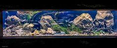 ผลการค้นหารูปภาพสำหรับ panorama aquarium