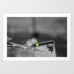 Squirrel Time in green II Art Print by Angelika Kimmig - $17.68