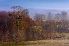 Enter the Mist Part II by Lari Huttunen on Mists, Landscapes, Country Roads, Scene, Paisajes, Scenery, Stage