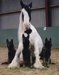 """~You know you're a horse lover when...you say """"whoa"""" to your dog."""