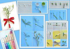 """""""#Vascul este un simbol pentru pace si bucurie"""" si tot mai prezent in anotimpul rece, atunci il propunem si pentru torturile de sezon   #banda flori verde #pensule din par natural https://decoratiunidulci.ro/diferite-ustensile/824-set-6-pensule-.html #dust pentru nuantarea petalelor  https://decoratiunidulci.ro/coloranti-si-carioci-alimentare/677-spruce-green-dust-wilton.html SURSA: http://www.blog.birdsparty.com/2013/12/diy-gumpaste-mistletoe.html#.UuurdT1_uPt"""