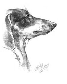 Dog Dachshund portrait. Attention. Doxie-3. by DigitalScrapShop. Doxie Drawing, Sketch.