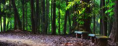 Udawatta Kele Sanctuary - Kandy via villarochelle.com