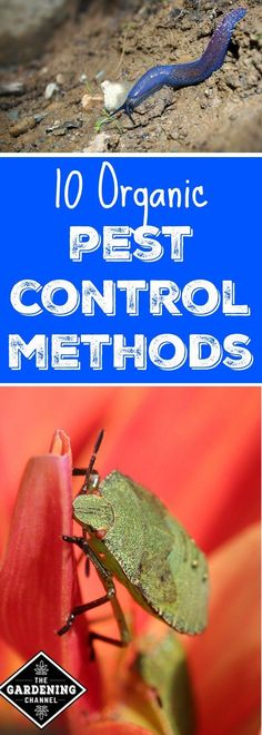 10 organic pest control methods that can help you keep your garden safe.  Try using one of these to protect your plants from pests.