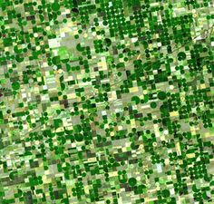 Center pivot irrigation - Wikipedia - A satellite image of circular fields characteristic of center pivot irrigation, Kansas. Earth And Space, Crop Circles, American Agriculture, Urban Agriculture, Crop Field, Surface Design, Aerial Images, Water Sources, Birds Eye View