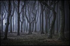 Foresta fantasma a Nienhagen / Baltico