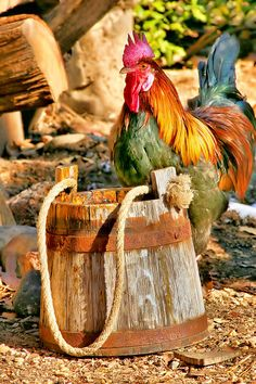 Colorful Rooster 2 by Mary Almond