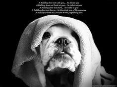 Englisch Bulldog Quote *sweet*
