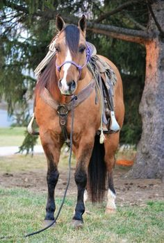 DUN RANCH/HEAD GELDING for Sale - For more information click on the image or see ad # 72190 on www.RanchWorldAds.com