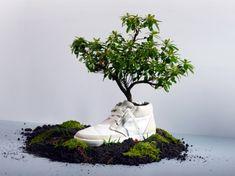 Plant a...shoe?