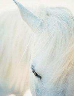 White horse ♥