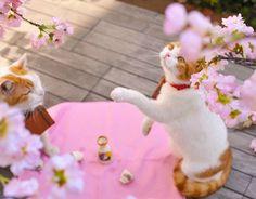 #cat #neko #japan